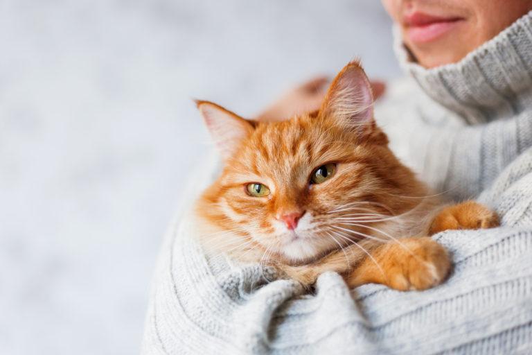 rezavá kočka v náručí