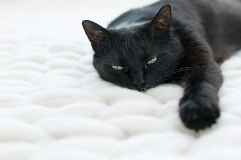 Černá kočka na bílé dece