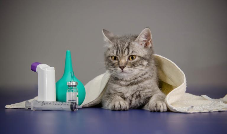 Kočka s lékařskými pomůckami