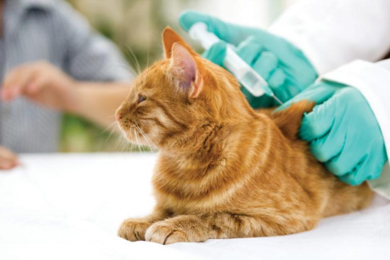 Očkování kočky