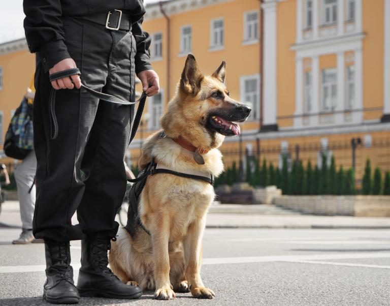 Policejní pes německý ovčák