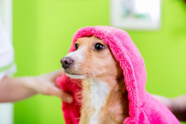 pes v růžovém županě