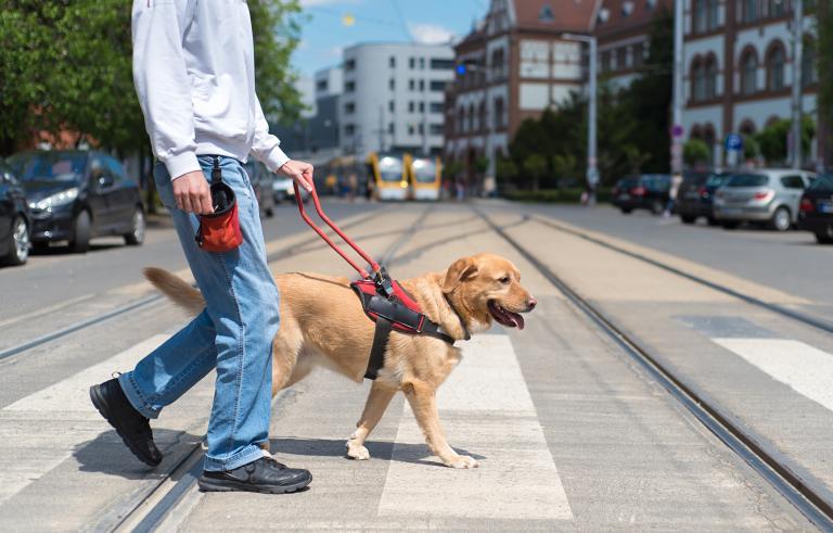slepecký pes - chůze přes přechod