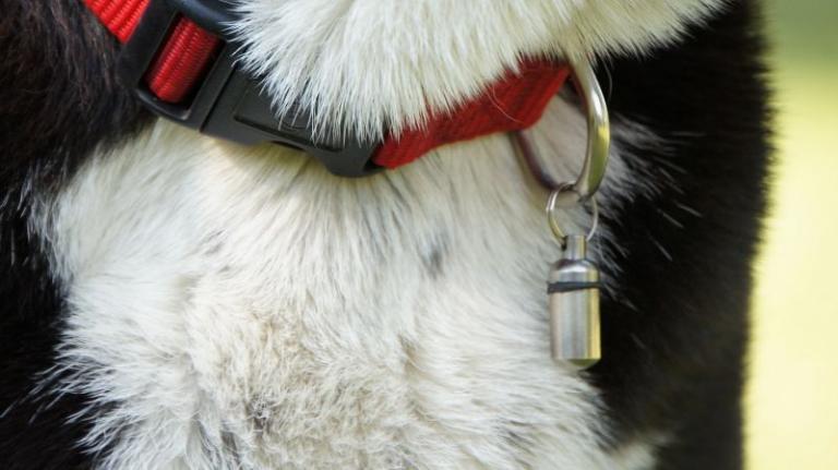 kovový přívěsek na adresu psa