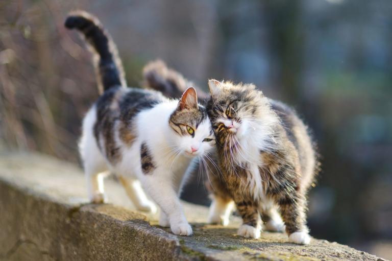 Dvě kočky na zidce