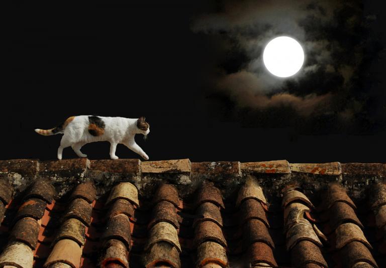 Kočka na střeše při měsíci