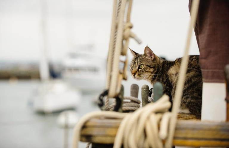 kočka na palubě lodi