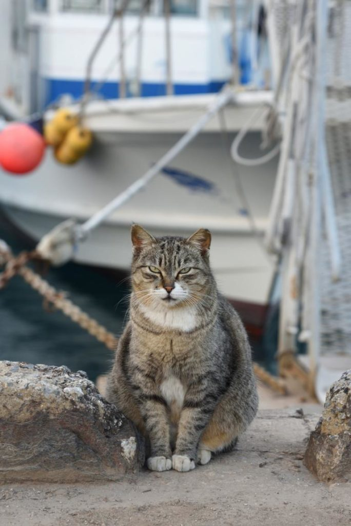 kočka sedí v přístavu