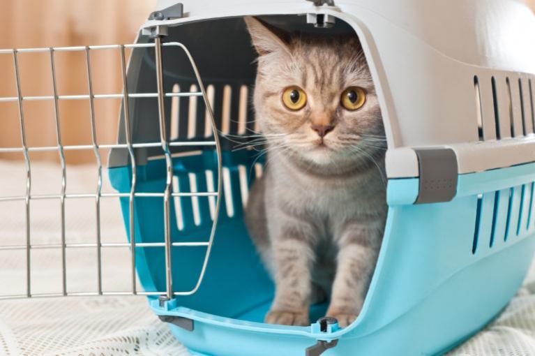 kočka v modré přepravce