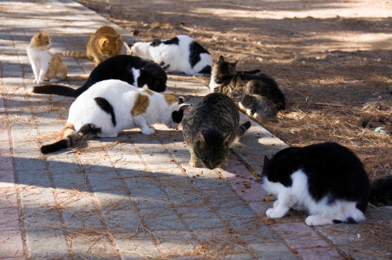 mnoho koček na chodníku