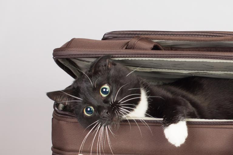 Černobílá kočka v kufru