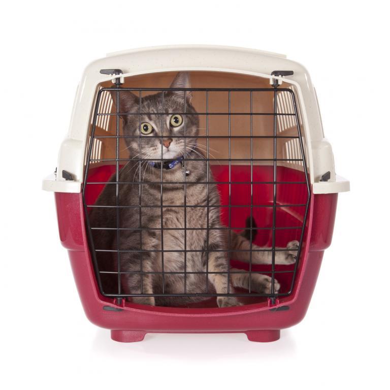Kočka sedí v přepravním boxu