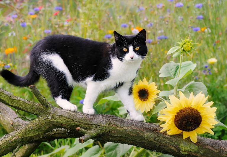 kočička streched velkým péro