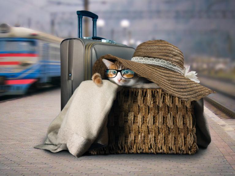 kočka s kloboukem a brýlemi v cestovní tašce
