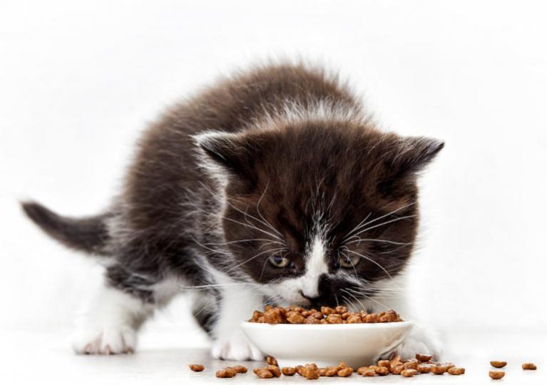 Bíločerné kotě jí z misky granule