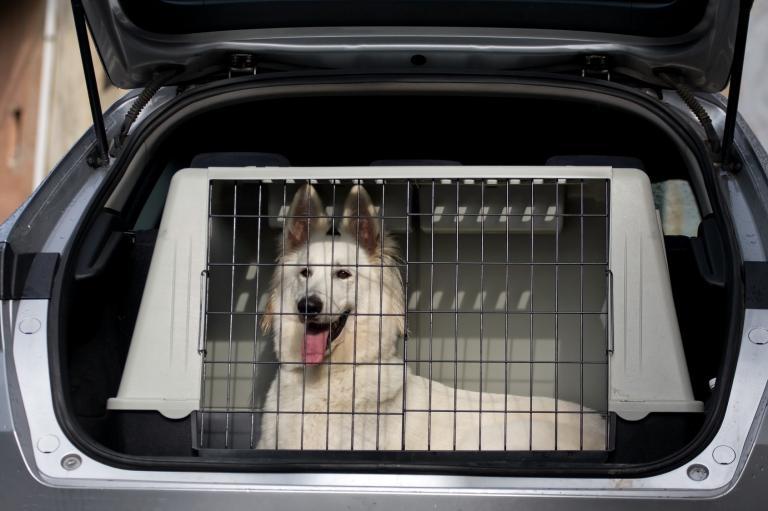 Pes v transportním boxu