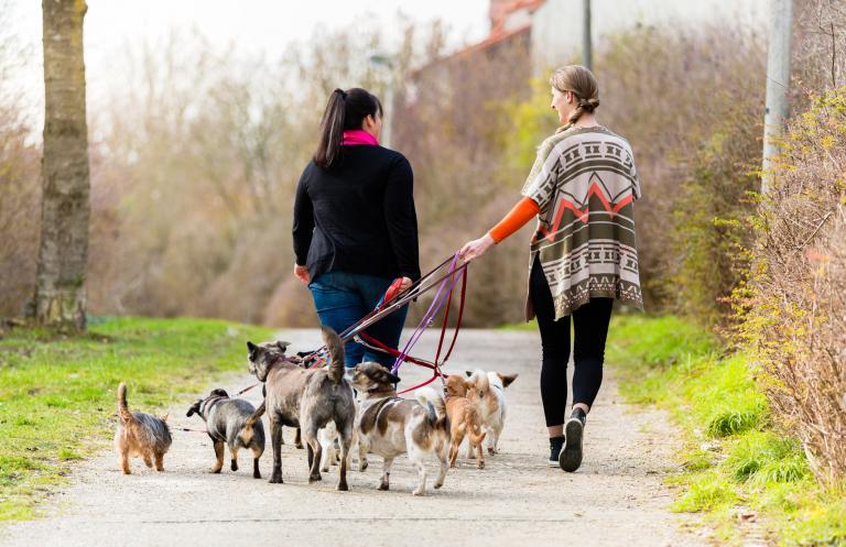 Opatrovatelky venčí psy