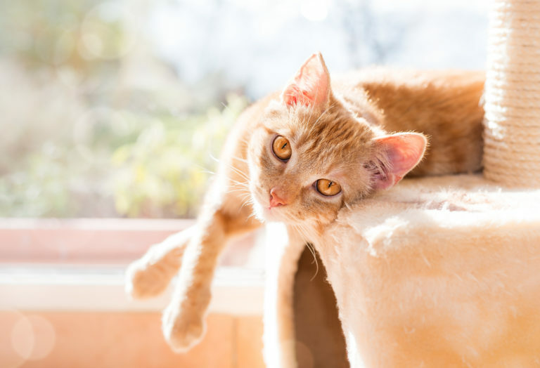 Rezavá kočka na škrabadle