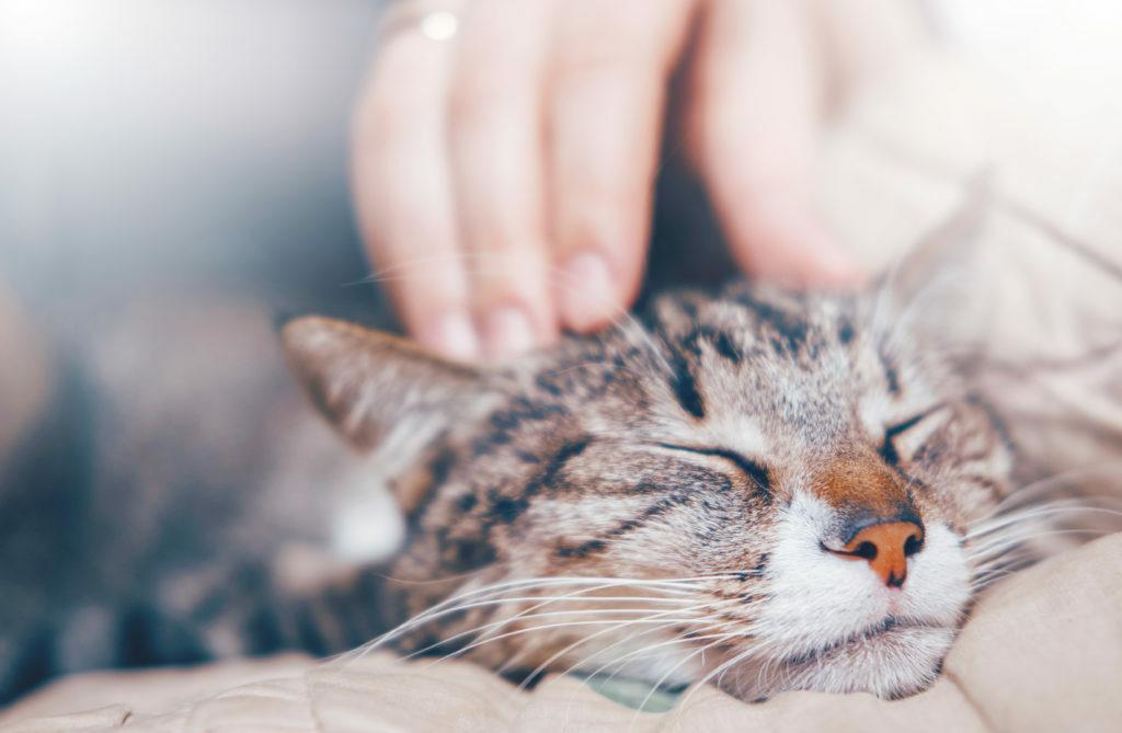 Hlazení kočky
