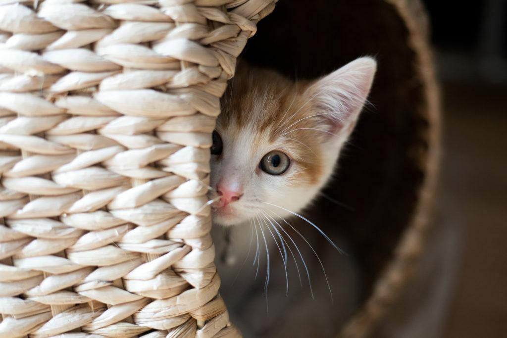 Kočka vykukující z košíku