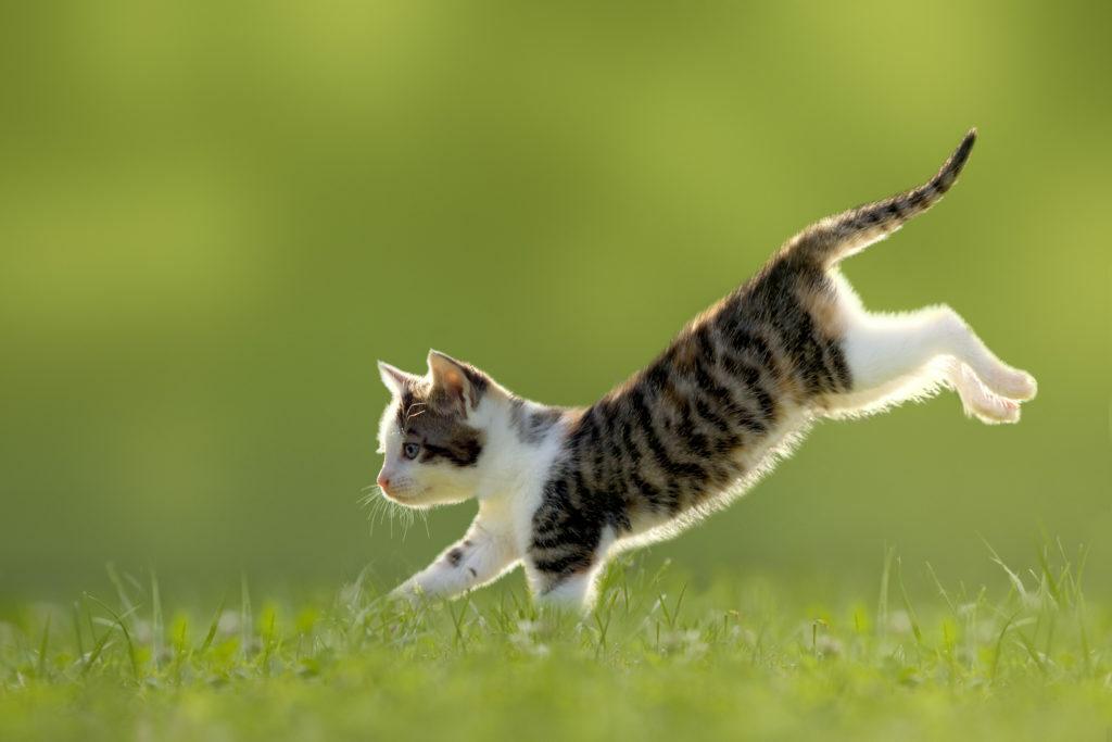 Běžící kotě v trávě