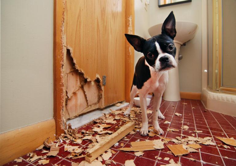Bostonek zničil dveře