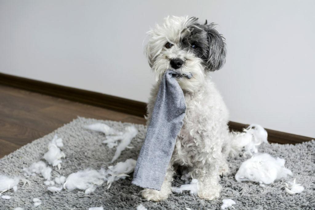 Pes zničil polštář