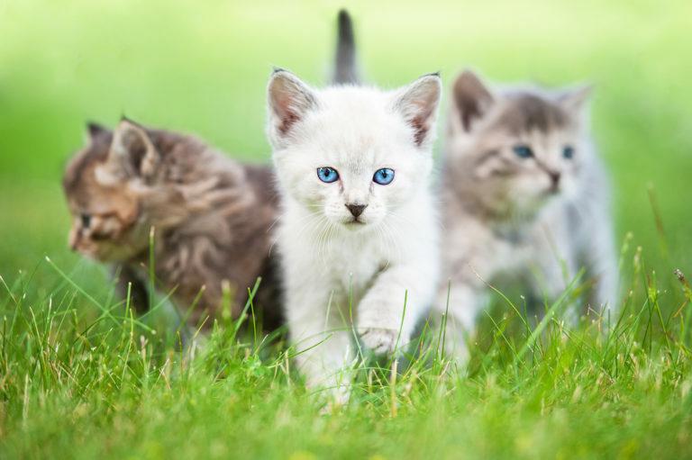 Tři koťátka na trávě