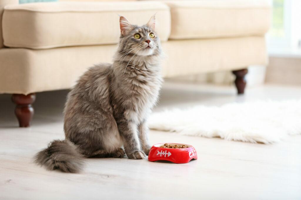 Kočka sedí u misky a nejí