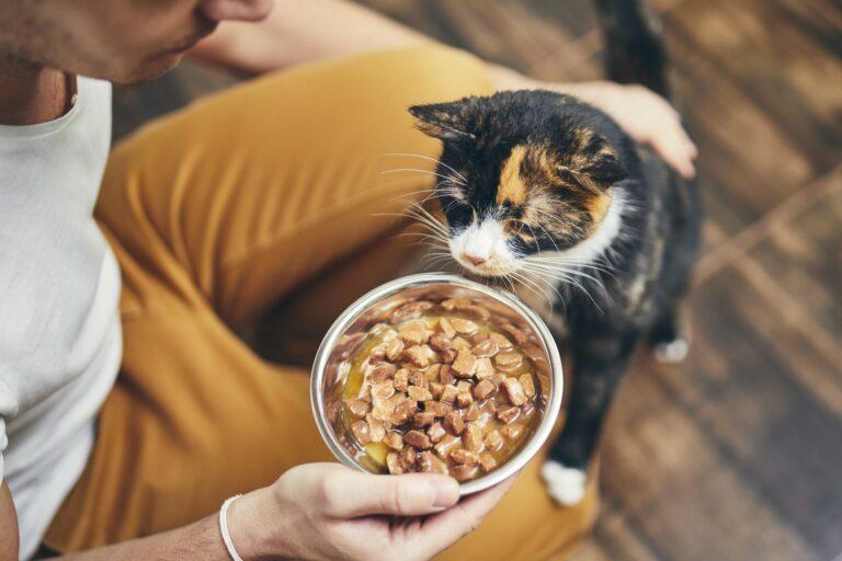 Kočka nejí z misky