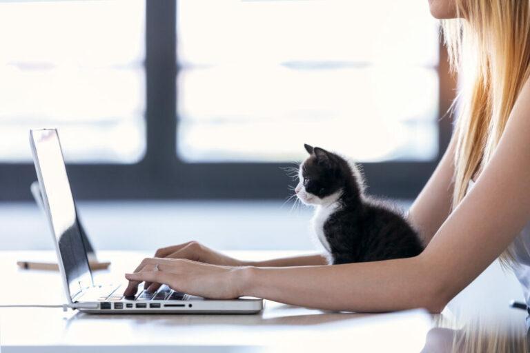 Paní pracuje na laptopu s kotětem