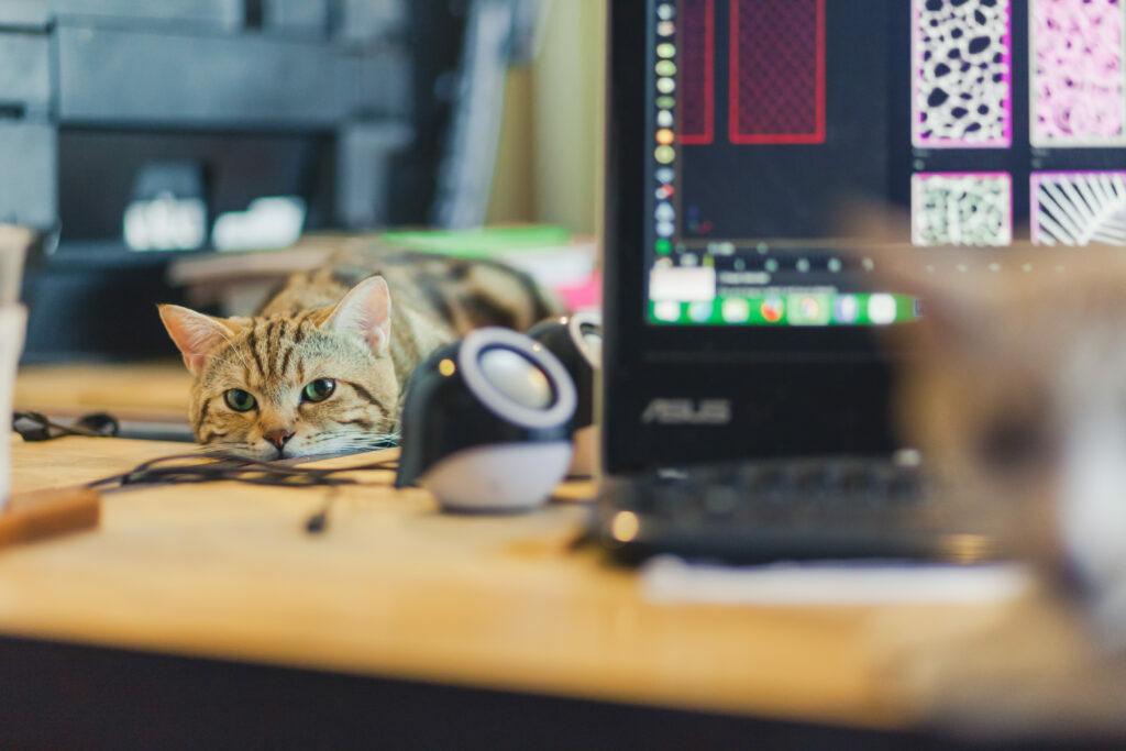 Práce z domova s kočkou