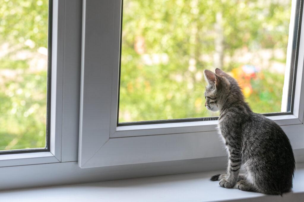 Koronavirus u koček