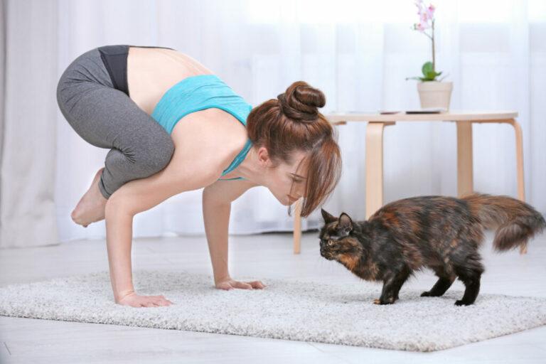 Paní cvičí jógu s kočkou
