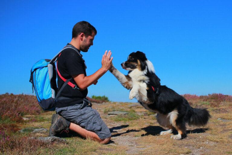 Pes dává s páníčkem high five
