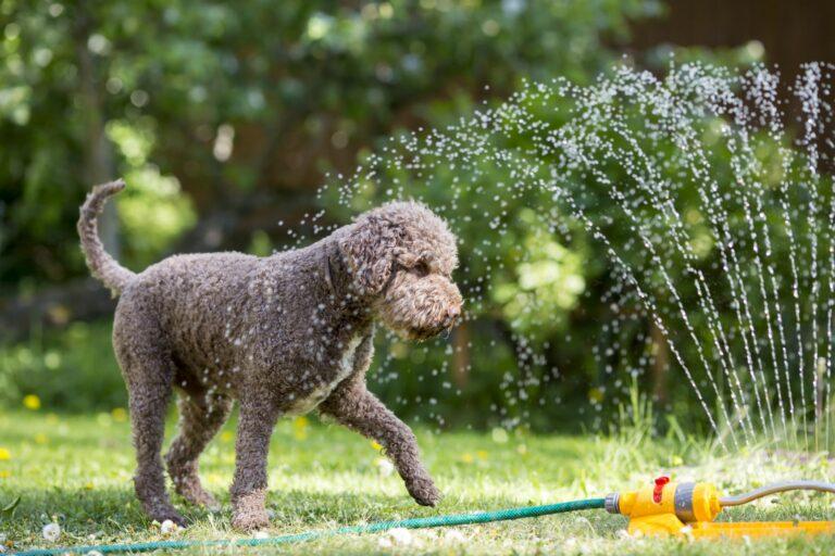 Pes na zahradě s rozprašovačem