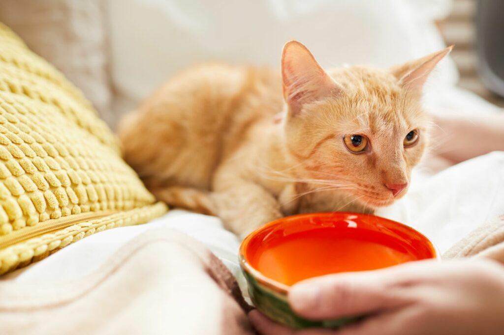 Podávání vody kočce v misce