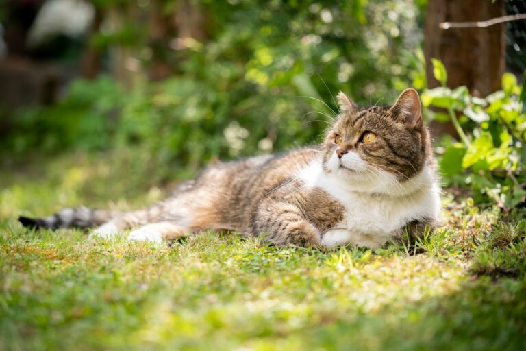 Kočka leží ve stínu na louce
