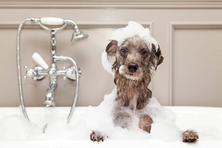 Koupání psa ve vaně