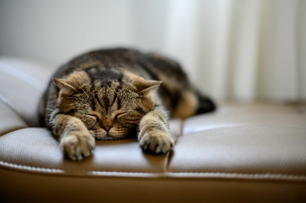 Kočka jako vzor: naučte se relaxovat