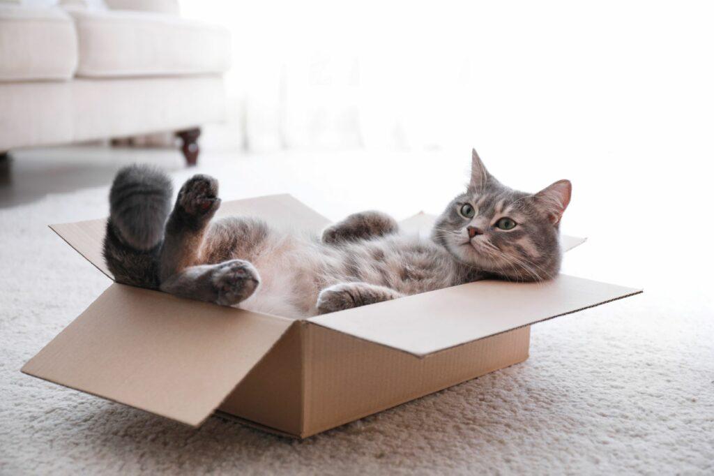 Kočka odpočívá v kartónové krabici