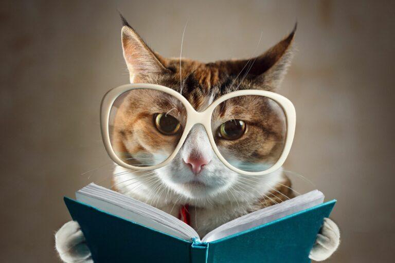 Kočka s brýlemi čte knihu