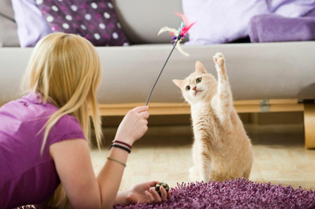 Kočka si hraje s udicí pro kočky