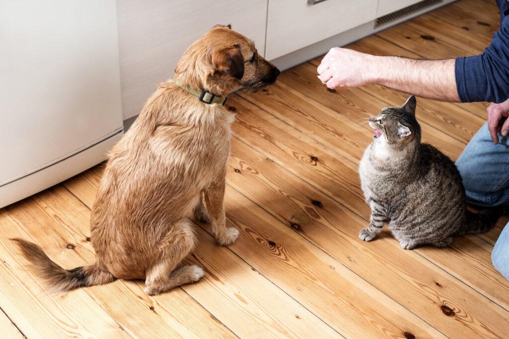 Kremení psa a kočky