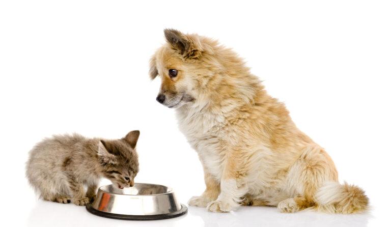 Pes a kotě jedí ze společné misky
