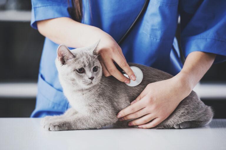 Kočka na vyšetření u veterinární lékařky