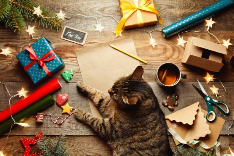 Kočka pomáhá při výrobě adventního kalendáře