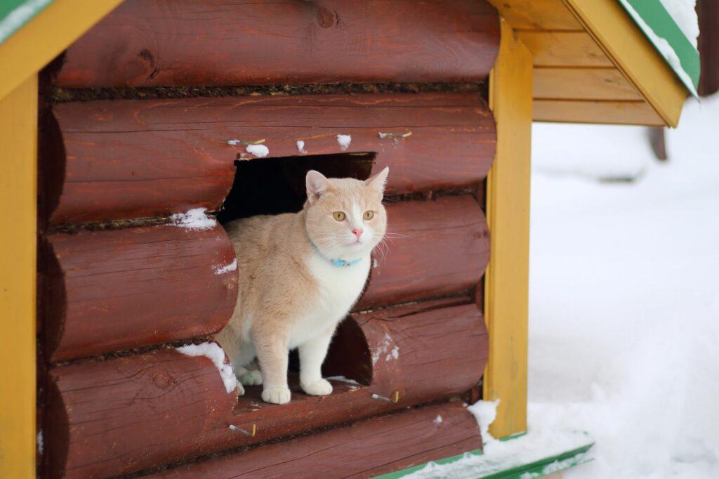 Kočka vyhlíží v zimě z kočičího domu.