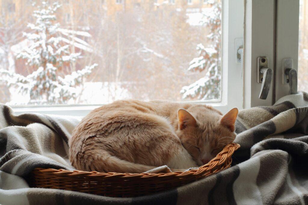 Kočka spí na parapetu