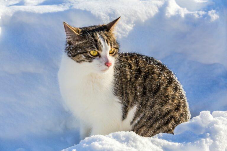 Kočka obklopená sněhem